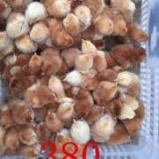 广汉中力家禽养殖有限责任公司