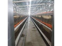 肉鸡笼框架养殖肉鸡笼大型养殖场笼养设备